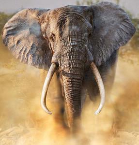 #12 Elephant