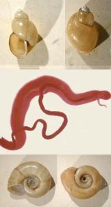 #7 Freshwater Snails