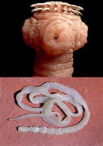 #9 Tapeworm